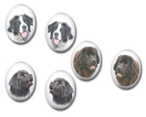 Black, Chocolate Brown or Landseer Newfie  gemstone stud earrings - Pierced or clip-on