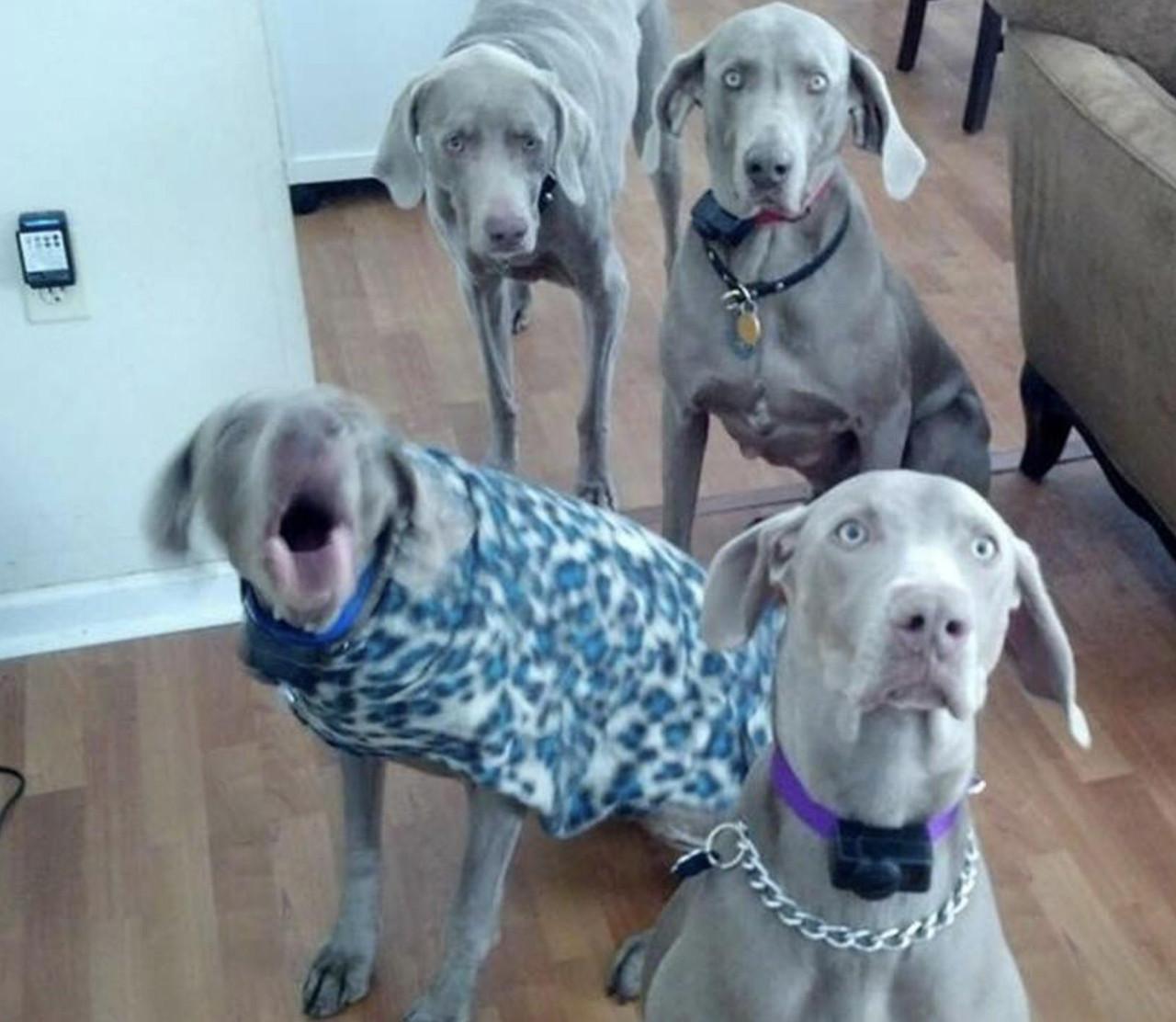 DBF Medley - Dogs best friend 50 Lb box 5Lb tubes