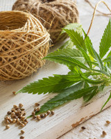 Benefits of using cannabidiol to your health