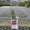Rlc. Marsha T. Tsuruda 'VQ' (Gift Box)