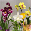 Spring Love Trio Special