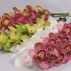 Mini  Cymbidium Orchid Sprays (Assorted Colors)
