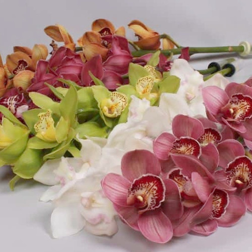 Mini  Cymbidium Orchid Sprays (Assorted Colors)