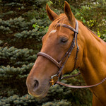 HDR Pro Monocrown Fancy Stitched Padded Bridle with Laced Reins