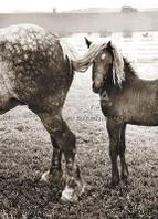 Foal Under Horse's Tail Encouragement Card