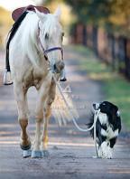 Dog Walking Horse Blank Card