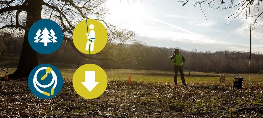 <span>TFTC #15</span> Tree Climber's Checklist