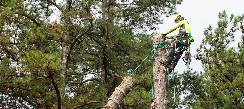 <span>TFTC #18</span> Arboriculture – Is it an Occupation or a Profession?