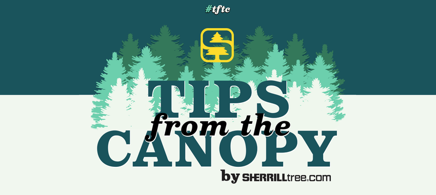 <span>TFTC #1</span>  Introducing Tips from the Canopy