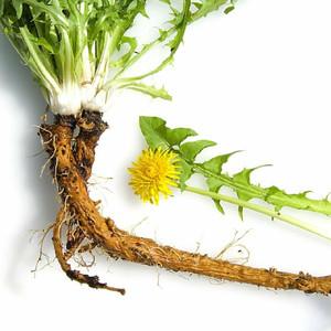 Dandelion Root powder,  1/2 oz