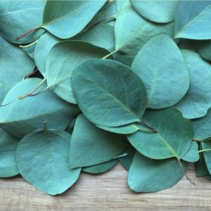 Eucalyptus Leaf,  c/s 1 oz