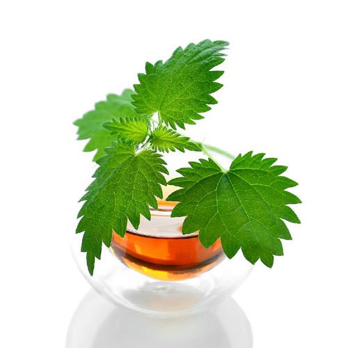 Nettle Leaf, Organic 1 oz