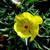 cnicus-2374052_1920--Image by Adi Jose Cichovicz Musskoff Adi J.C.Musskoff from Pixabay