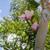 Hibiscus Flowers, Organic  c/s 1 oz. bag