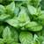 Peppermint Leaf,  Organic 1.0 oz.