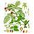 Raspberry Leaf,  c/s 1/2 oz