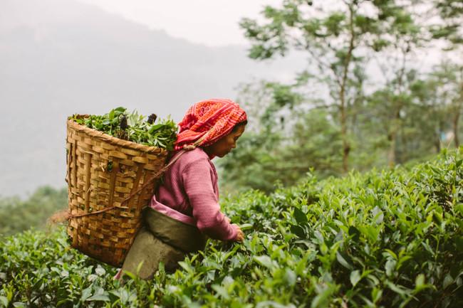 Tea is an Art!
