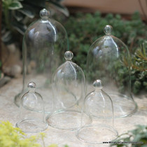 English Glass Bell Jars