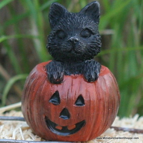 Kitten in a Pumpkin