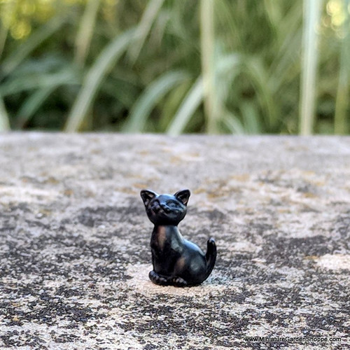 Tiny Black Cat