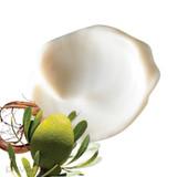 Stem Cells Phyto-Elite Intensive Cream