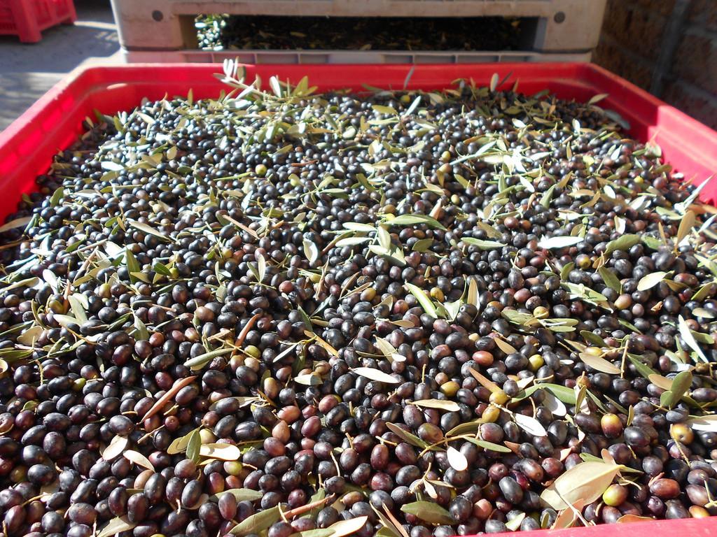 Olio Fresco 2018 Harvest Case of 6