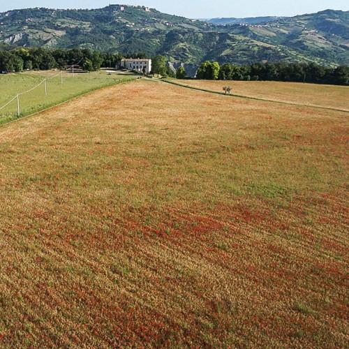 CASINO DI CAPRAFICO LENTICCHE (LENTILS), ITALY 500G 1.1 LBS