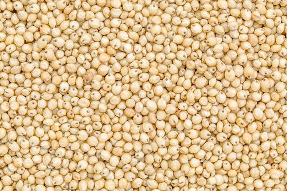 Jalpur - Whole Sorghum Seeds (Juwar Whole) - 200g