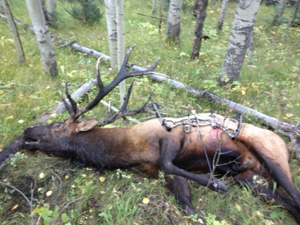 It's alot of work to haul out an elk when hunting by yourself.