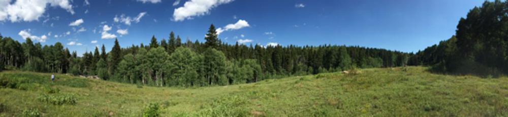 Private land hunting elk.