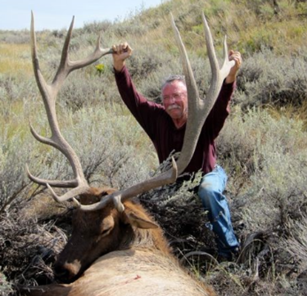 The elk don't get much bigger around Craig, Colorado.