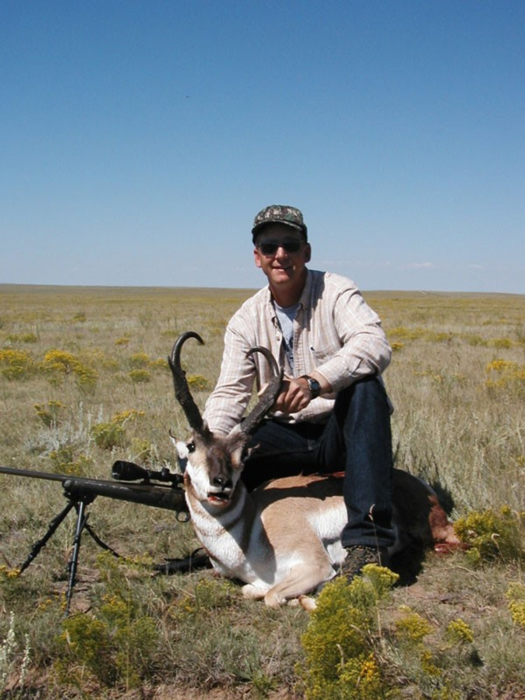 Open plains pronghorn buck