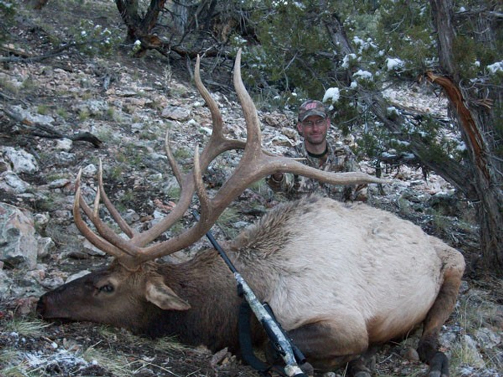 This 5x5 bull elk can't get any bigger.