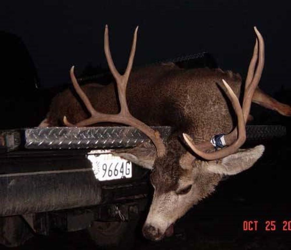 Typical 4x4 mule deer
