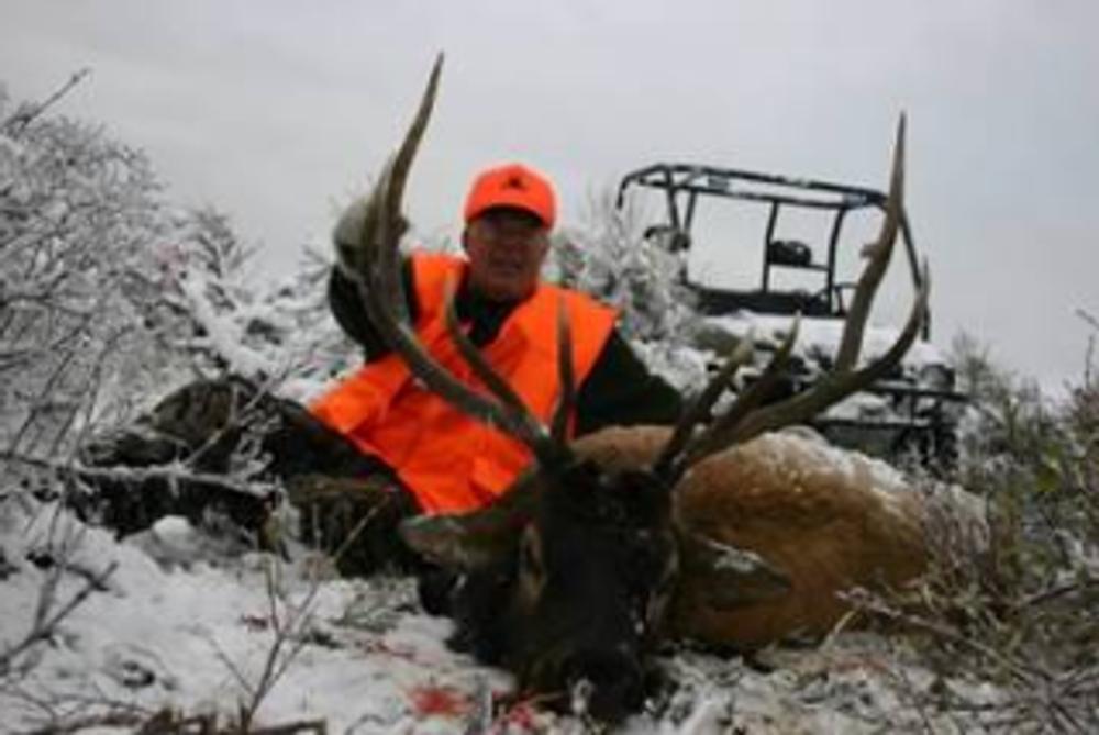 Bull elk in the snow.