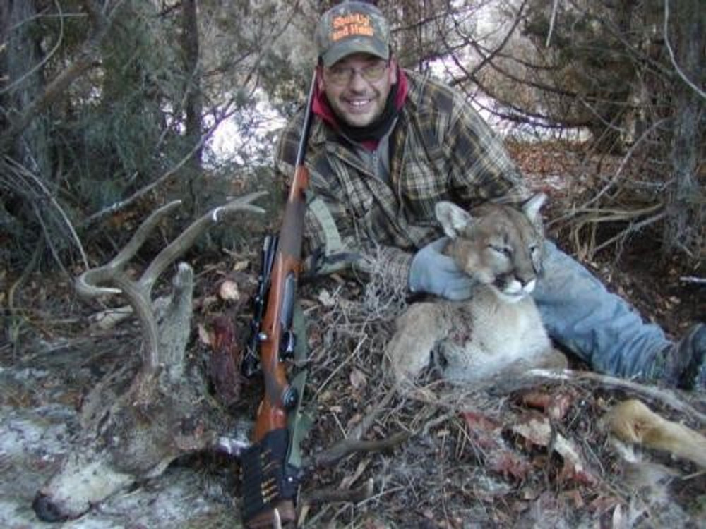 Mountain lion caught at his mule deer buck kill