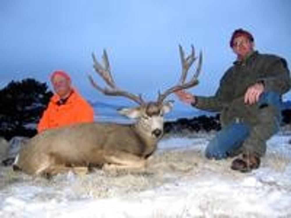 Nice wide mule deer buck.