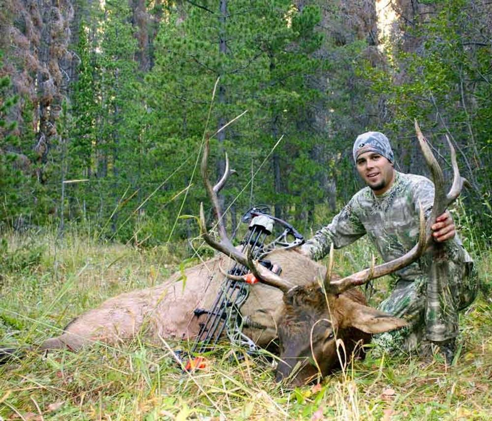 Any bull elk taken in archery season in Colorado is a trophy.