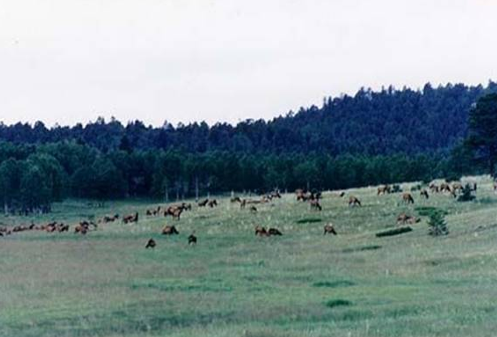 Hunt #5074 Mule Deer/Elk Guided Lodge
