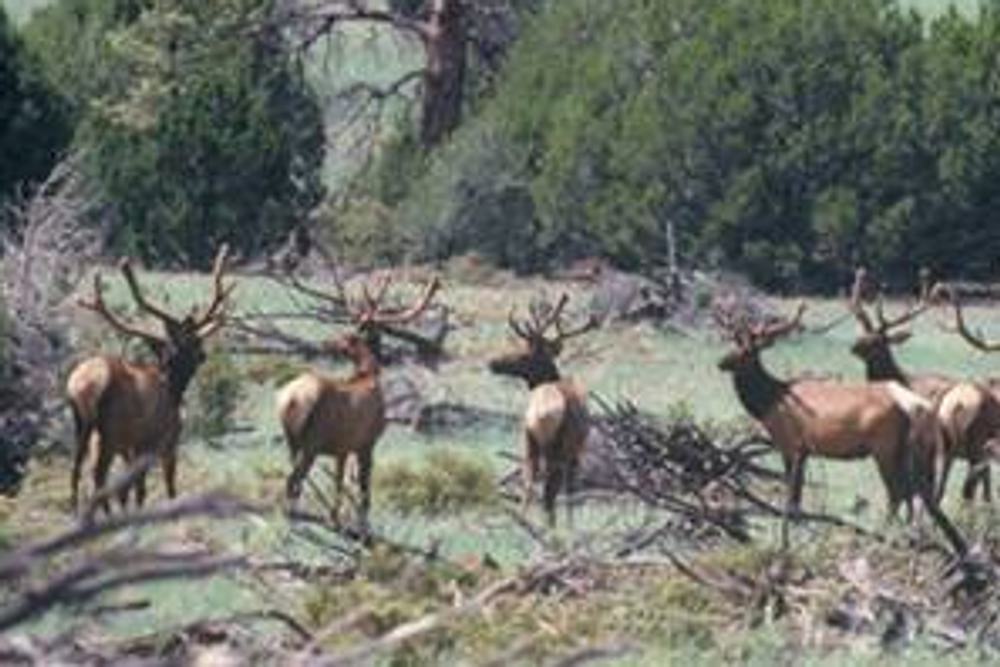Hunt #5099 Guided Horseback Elk/Deer & 10,000 Acres