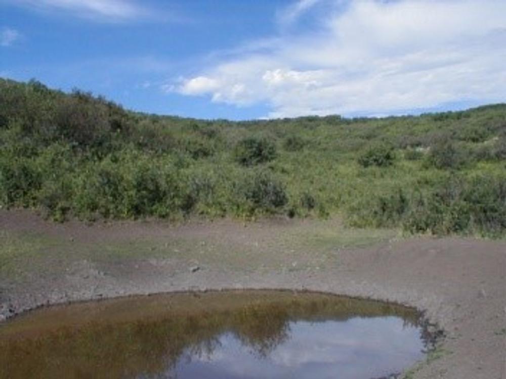 Ponds are an elk and deer magnate.