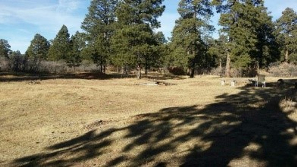 Open space around hunting cabin.
