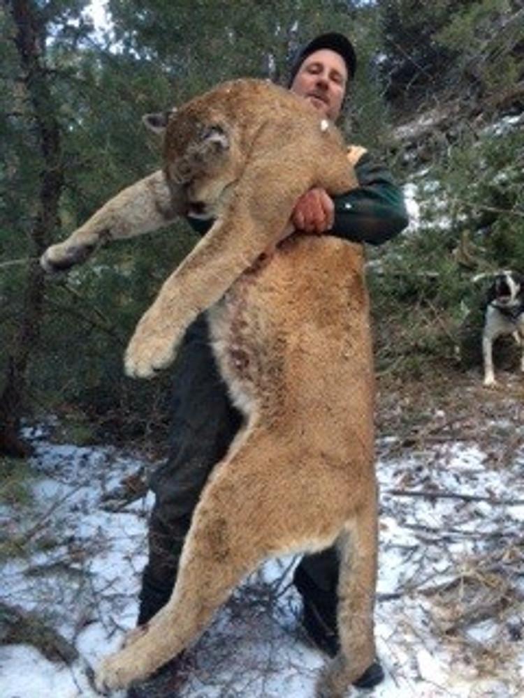 Monster tom mountain lion cat.