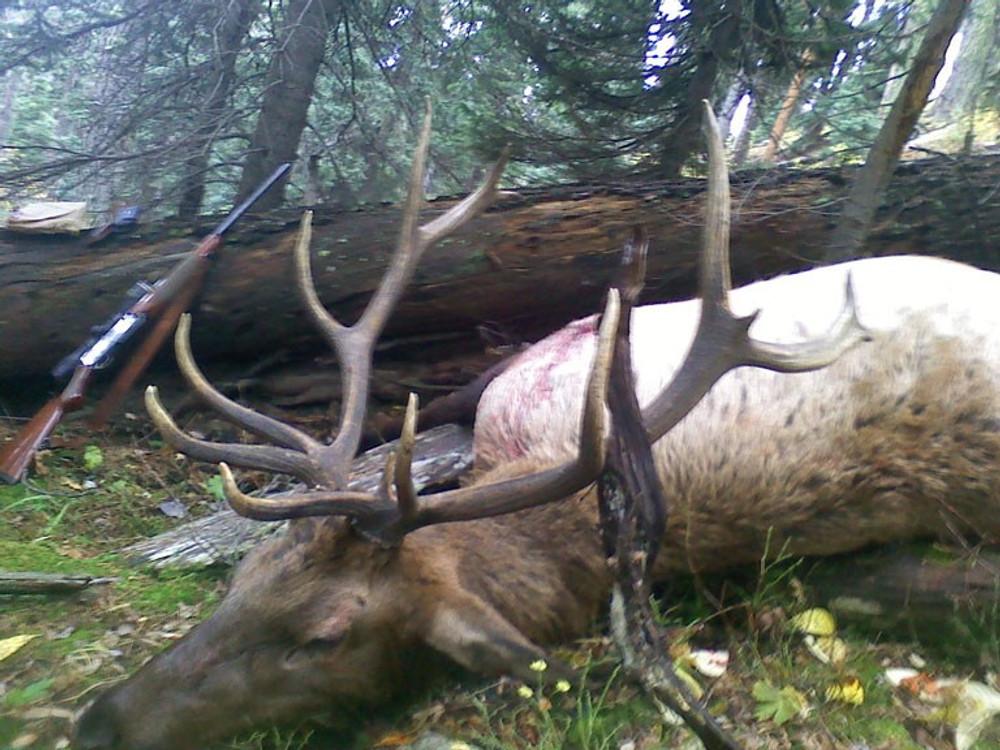 A nice 6x8 trophy bull elk.