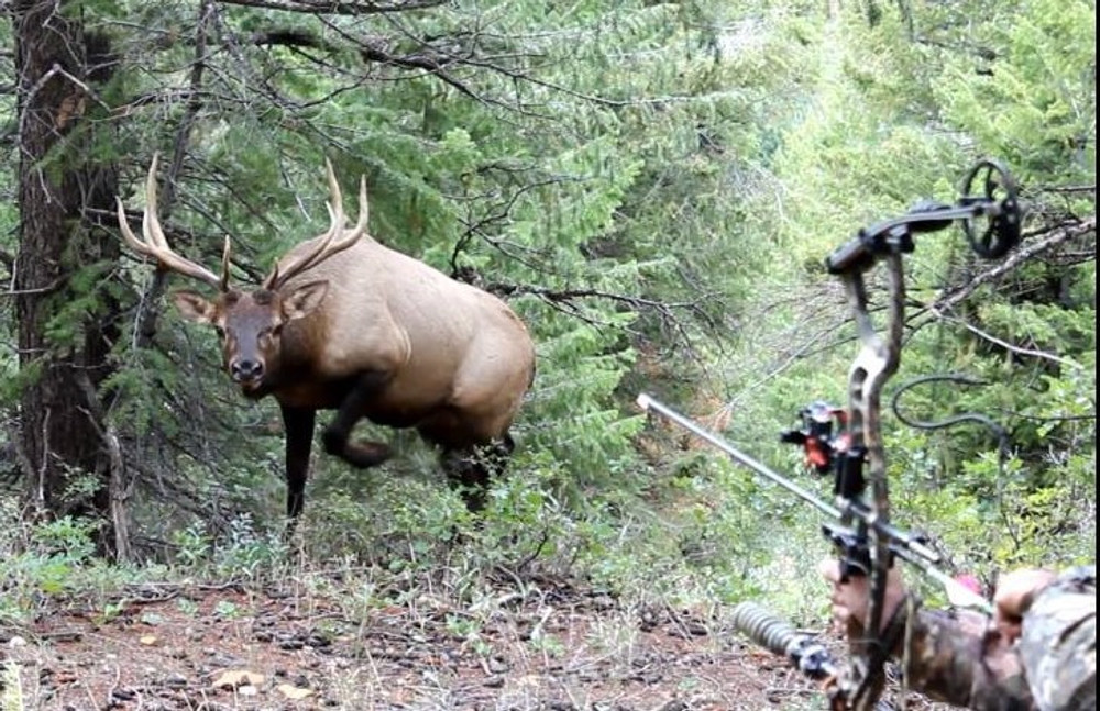 Calling in a trophy bull elk within yards.