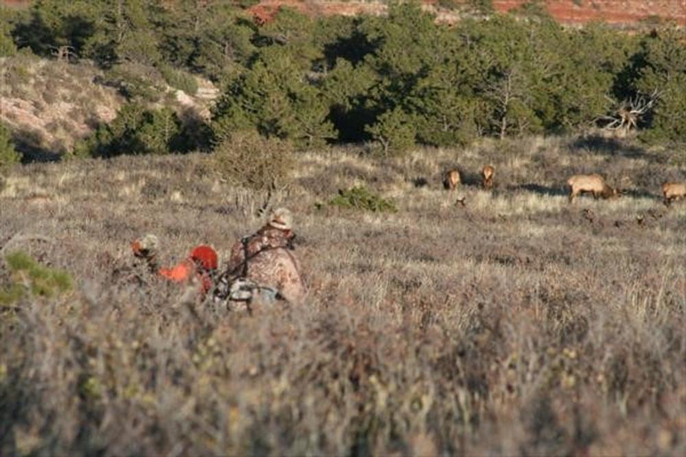 Stalking elk on private property.