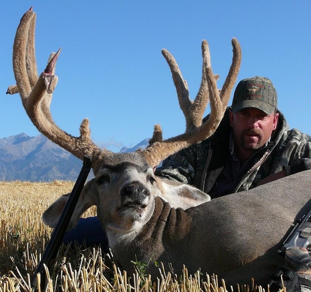 Trophy quality mule deer.