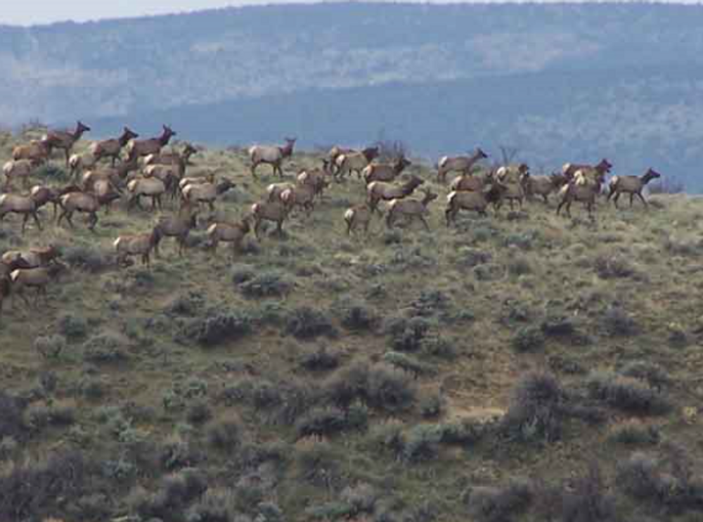 Elk herd and you will see alot in the later seasons.