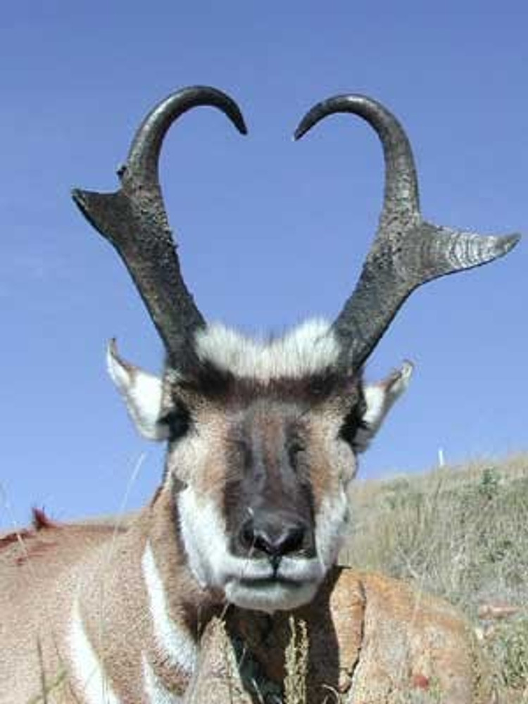 How did he get that close to an antelope?