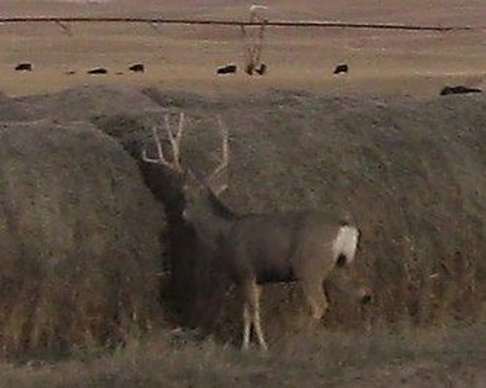 Deer eat the hay all the time.